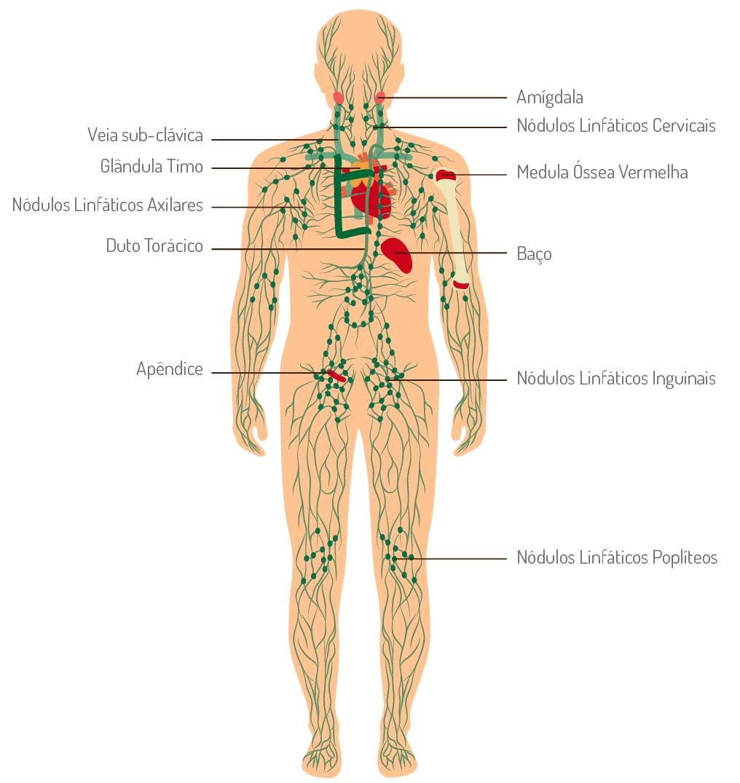 Linfoma de Hodgkin - sistema linfático