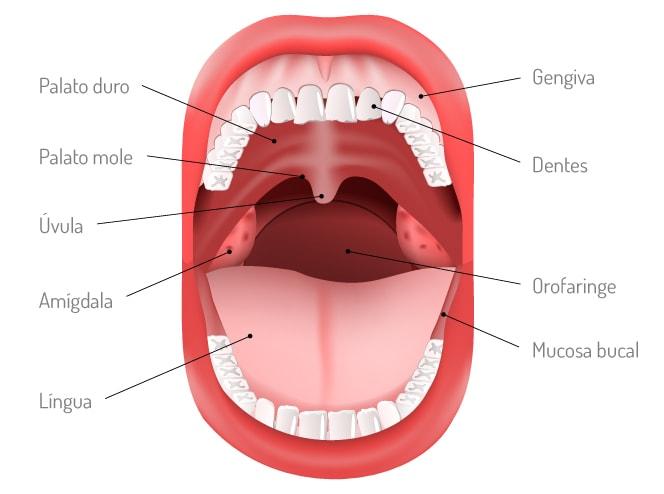 imagem cavidade oral